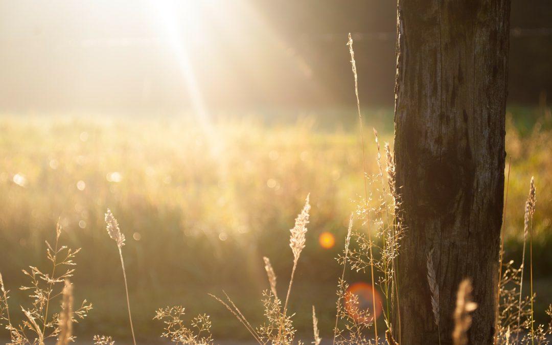 Sonnenenergie Vitamin D (3)